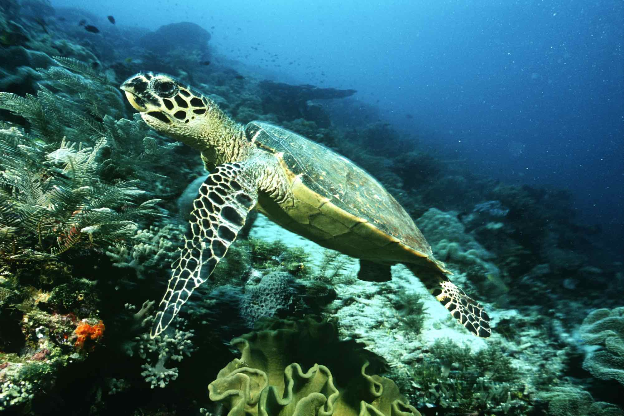 Turtle Wildlife Wallpapers